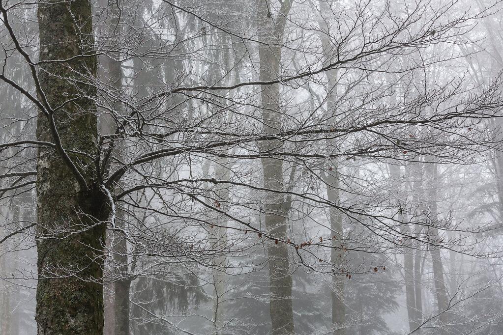 Schwarzwald V