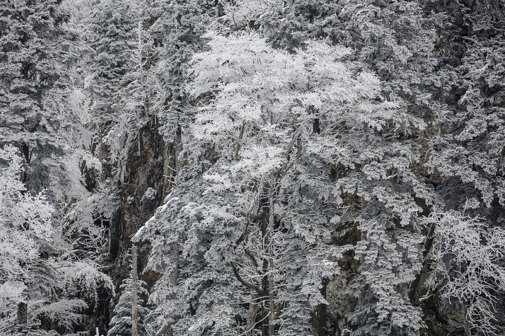 Schwarzwald I