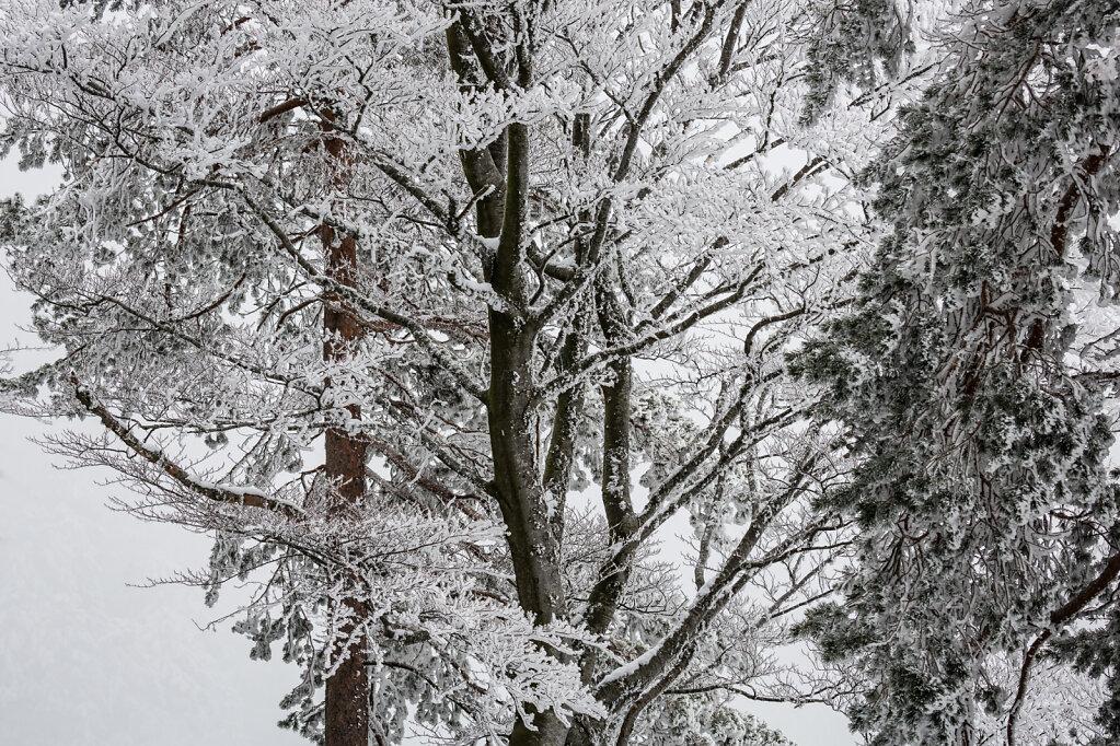 Schwarzwald VII