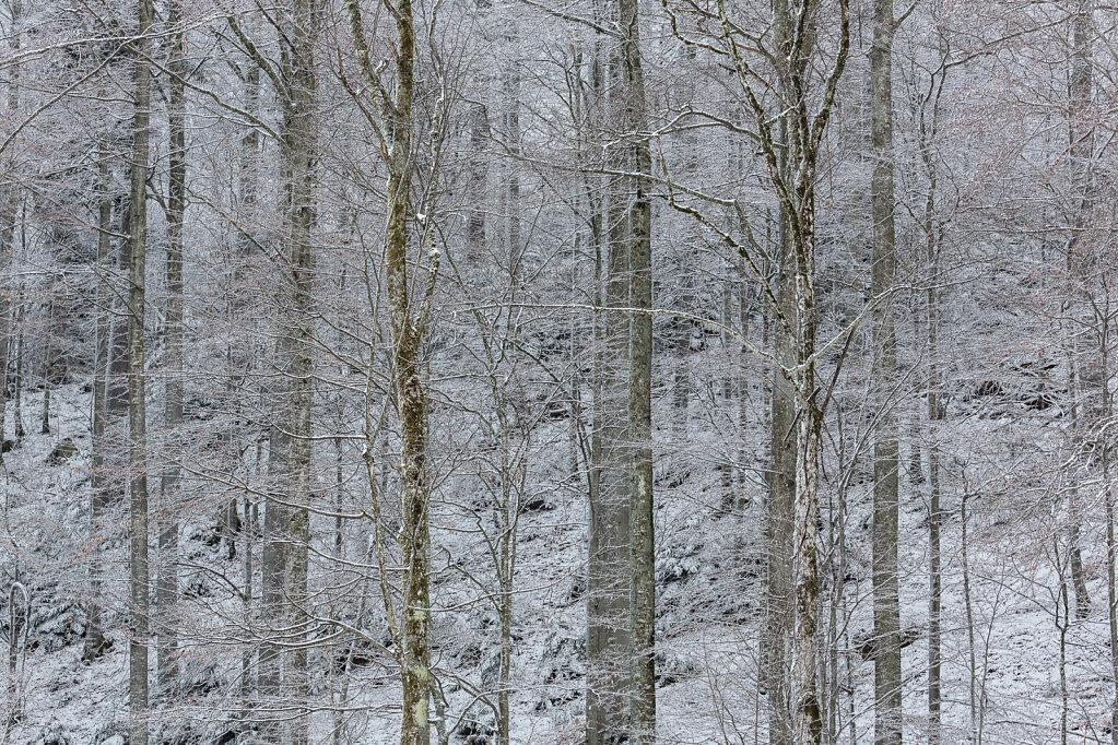 Wald XXVI