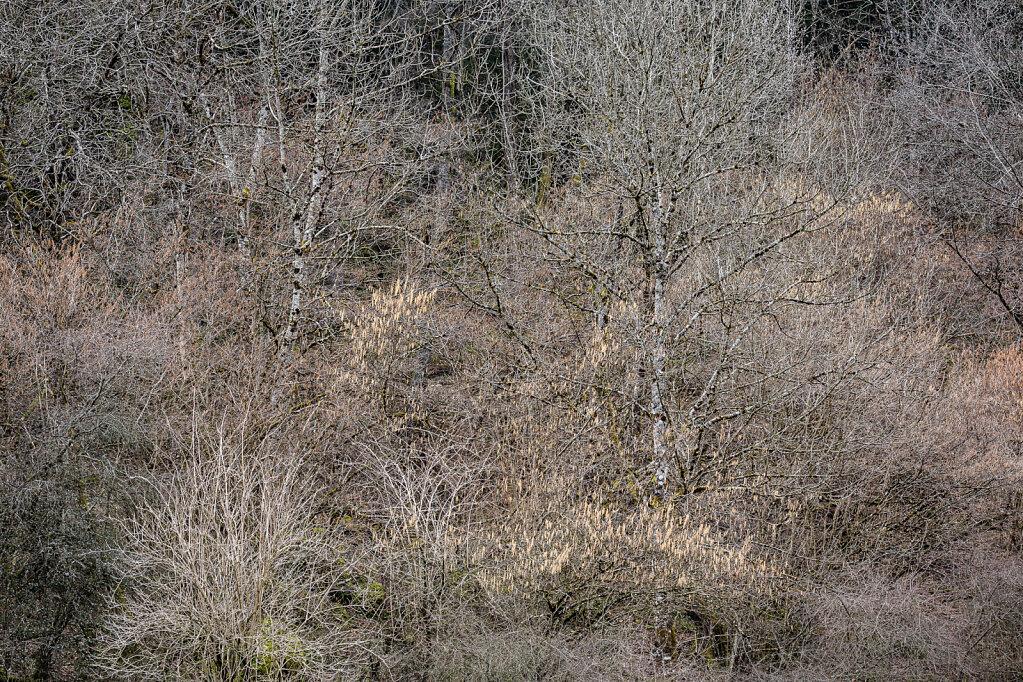 Wald XXVII