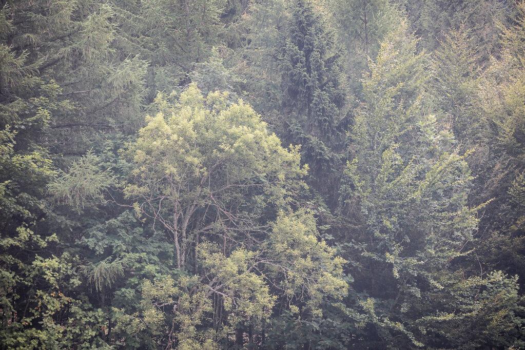 Wald XXXVI