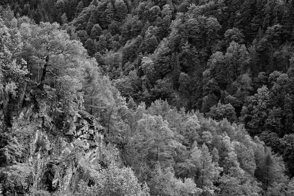 Schwarzwald 34