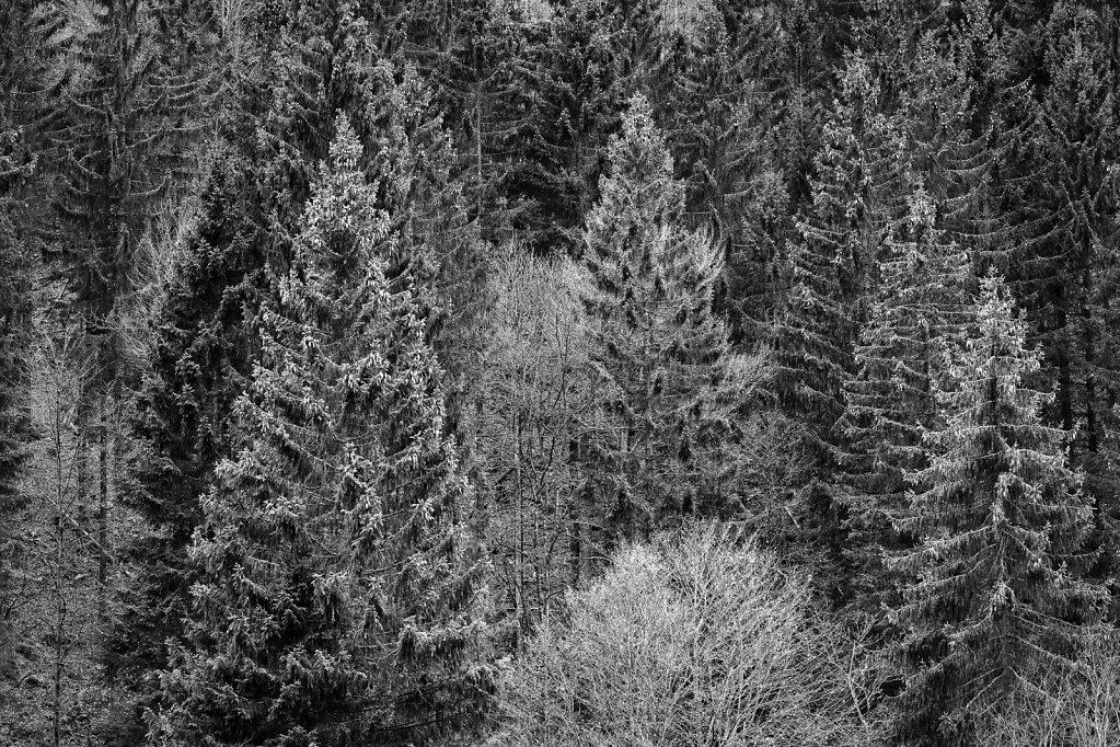 Schwarzwald 39