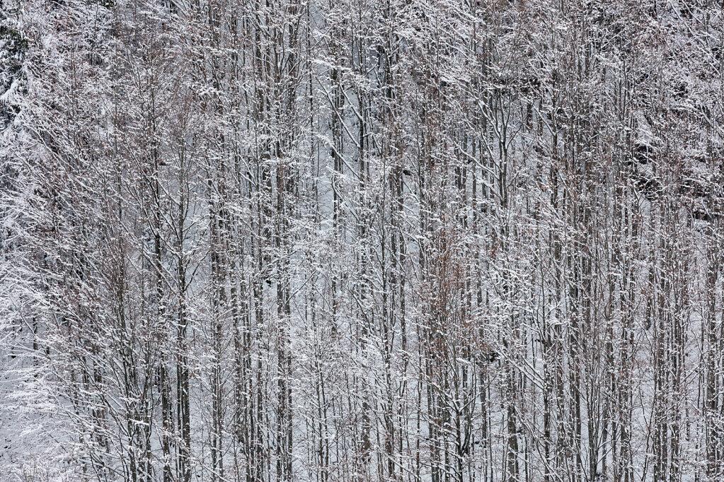 Wald XXXVIII