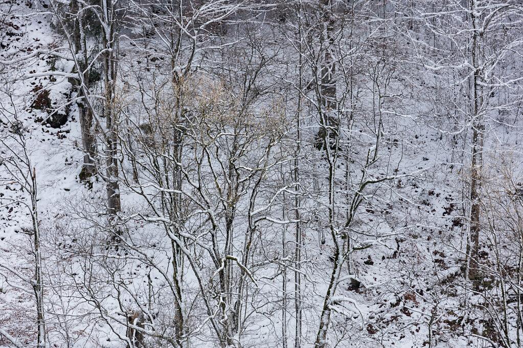 Wald XLI