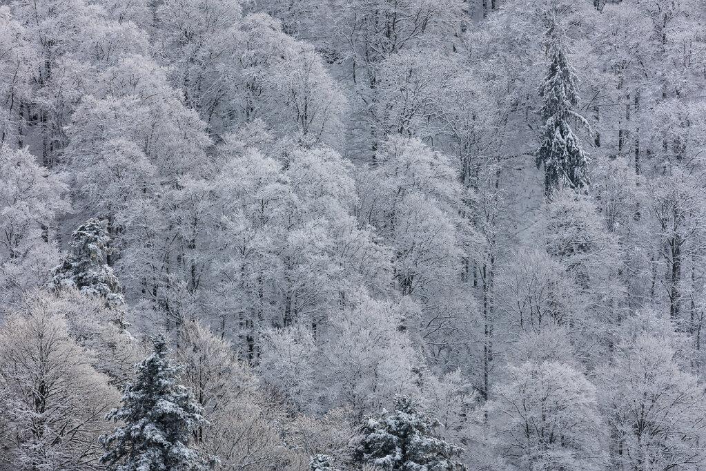 Wald XXXIX