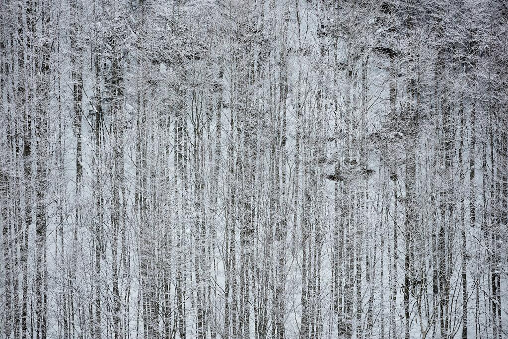 Wald XL