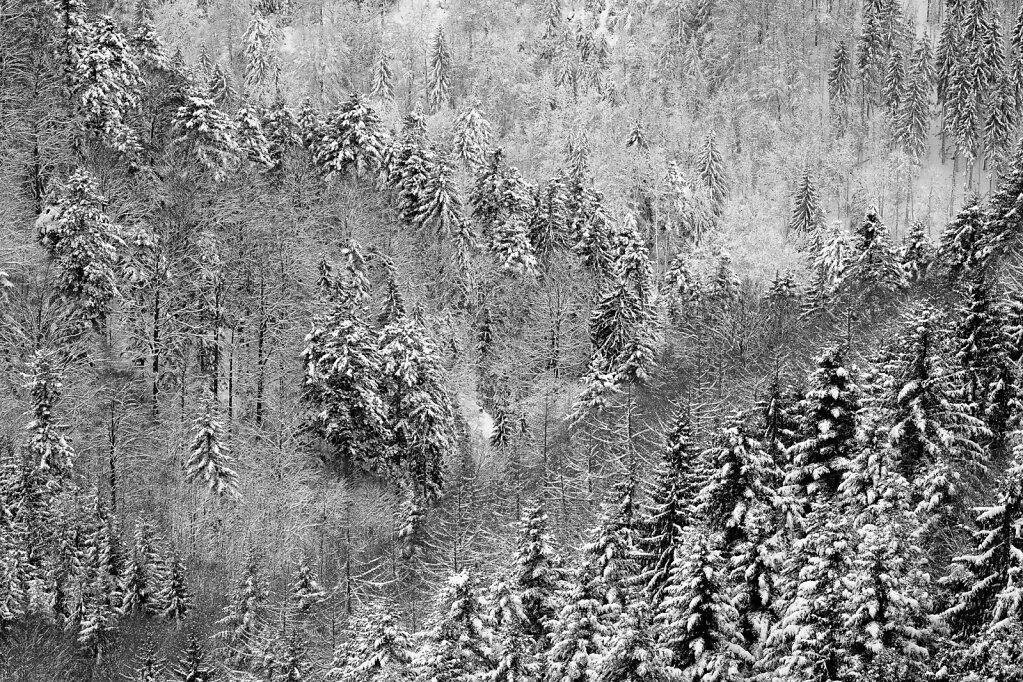 Schwarzwald 45