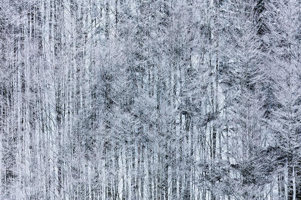 Wald XLV