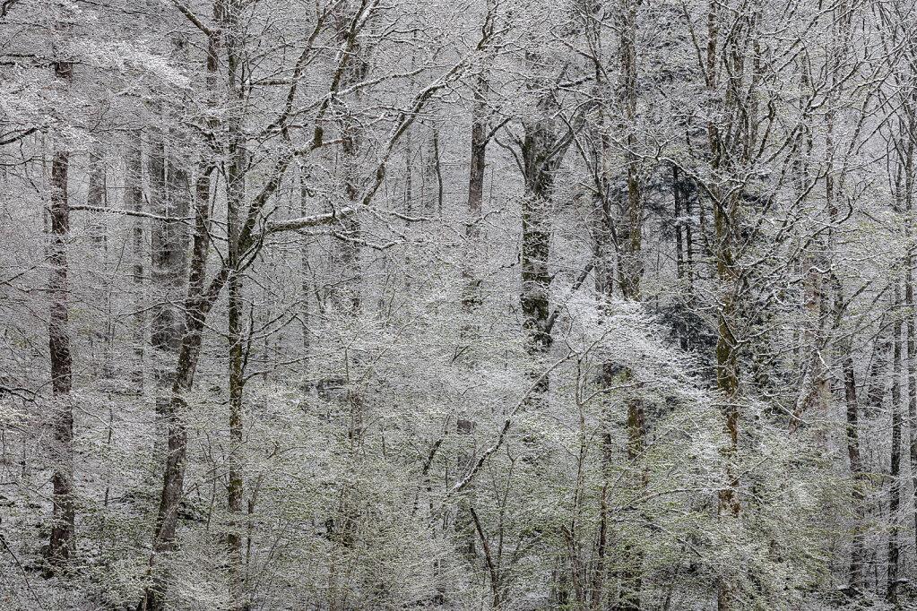 Wald XXXI