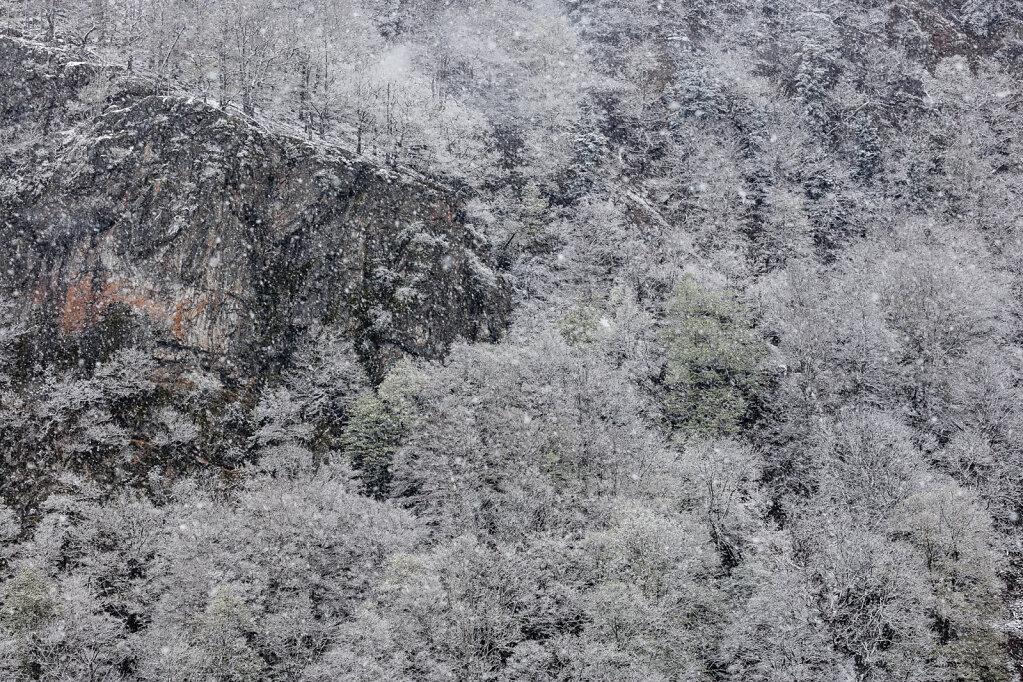 Schwarzwald XXVI