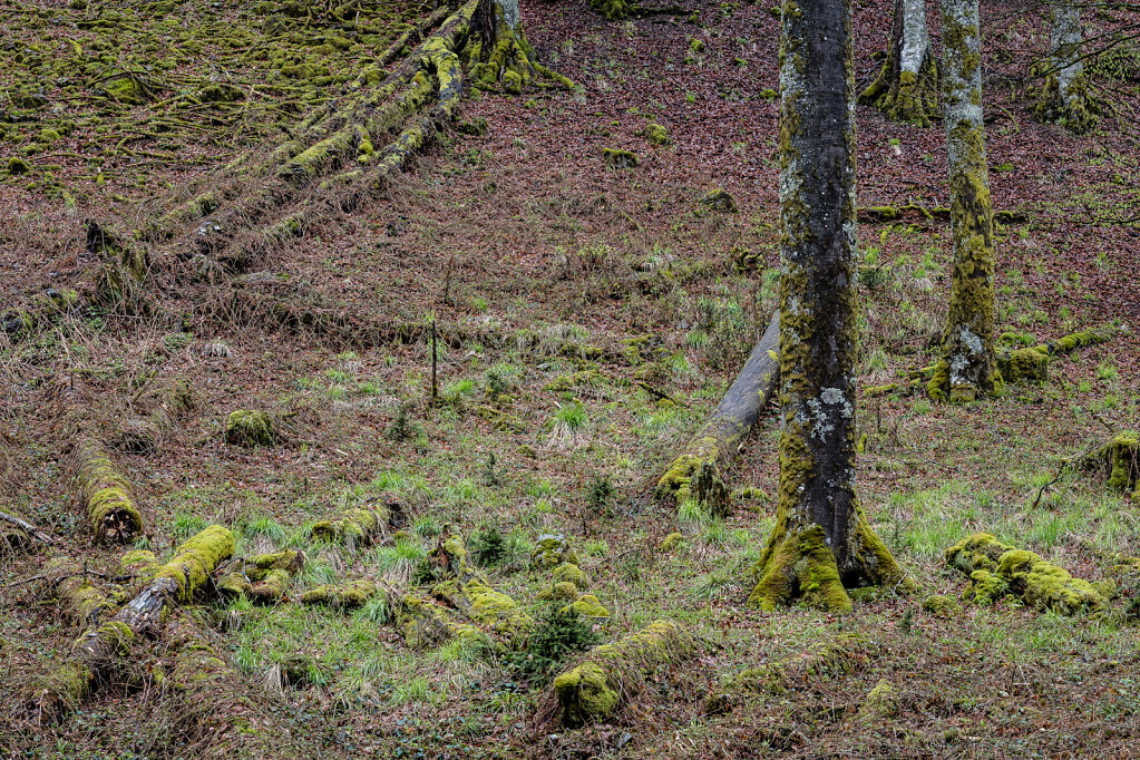Schwarzwald XXVIII