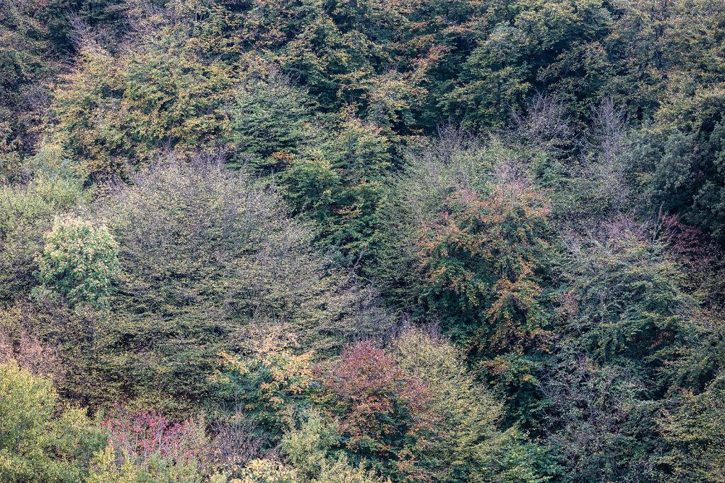 Wald LIII