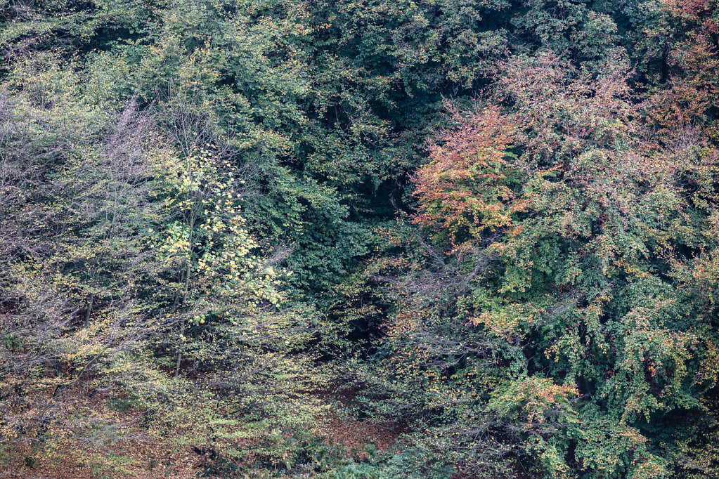Wald LII