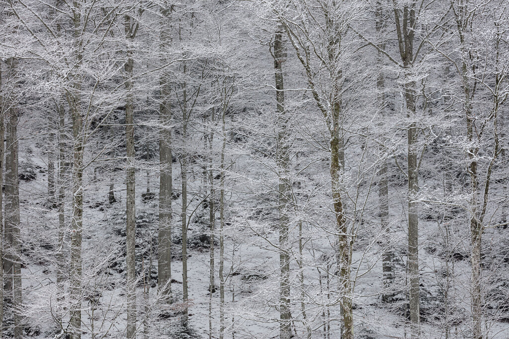 Wald LIX