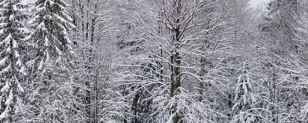 Wald LX