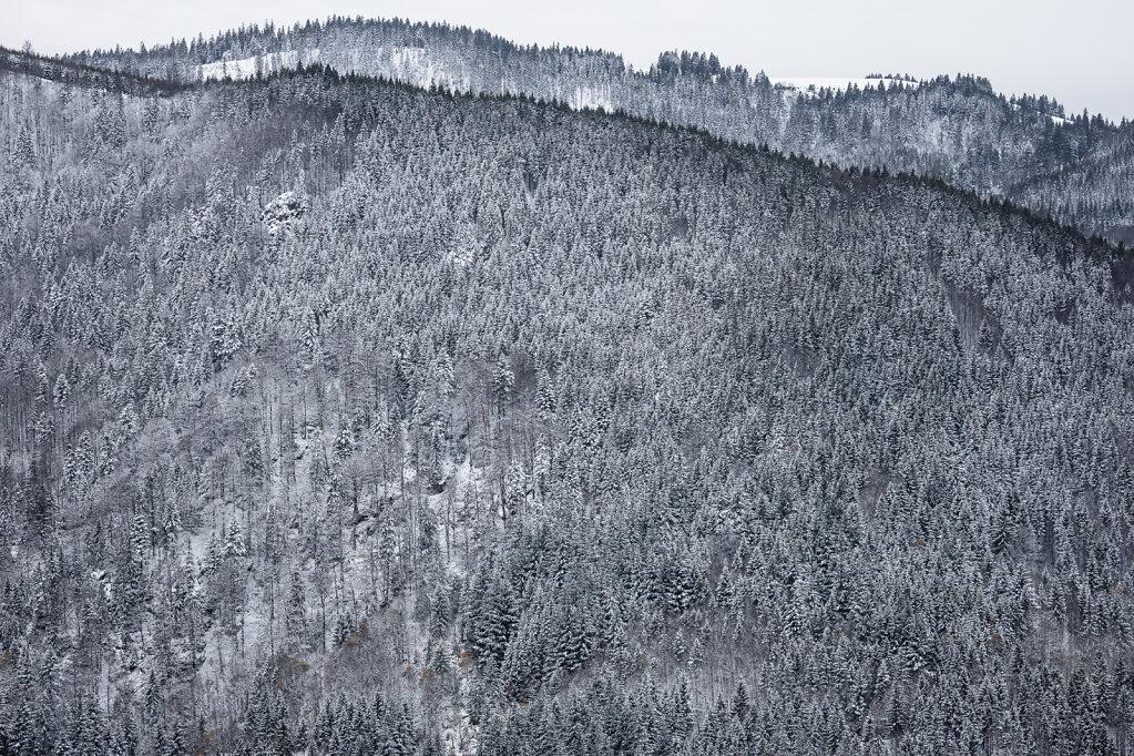 Schwarzwald XXXII
