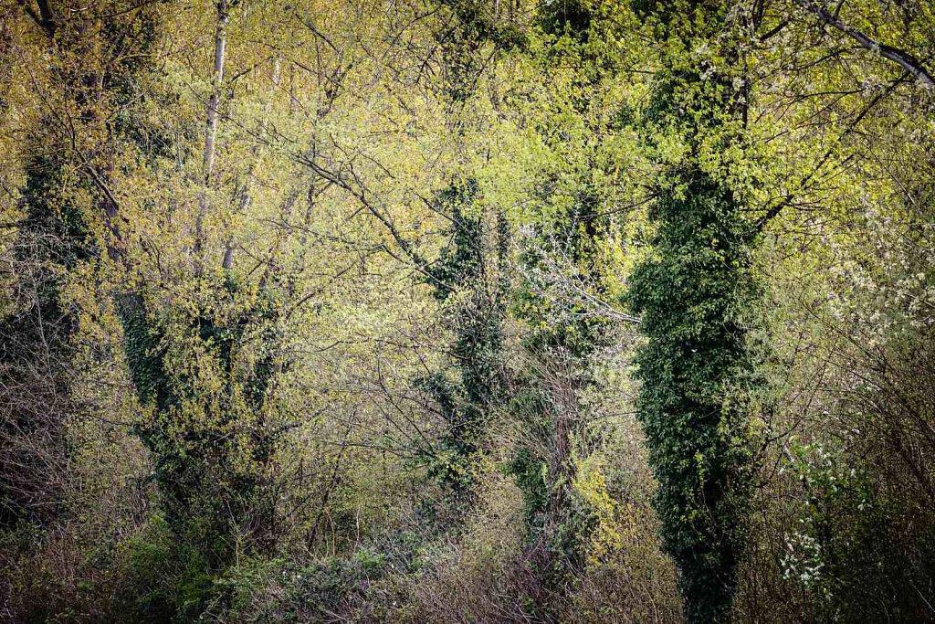 Rheinwald 1