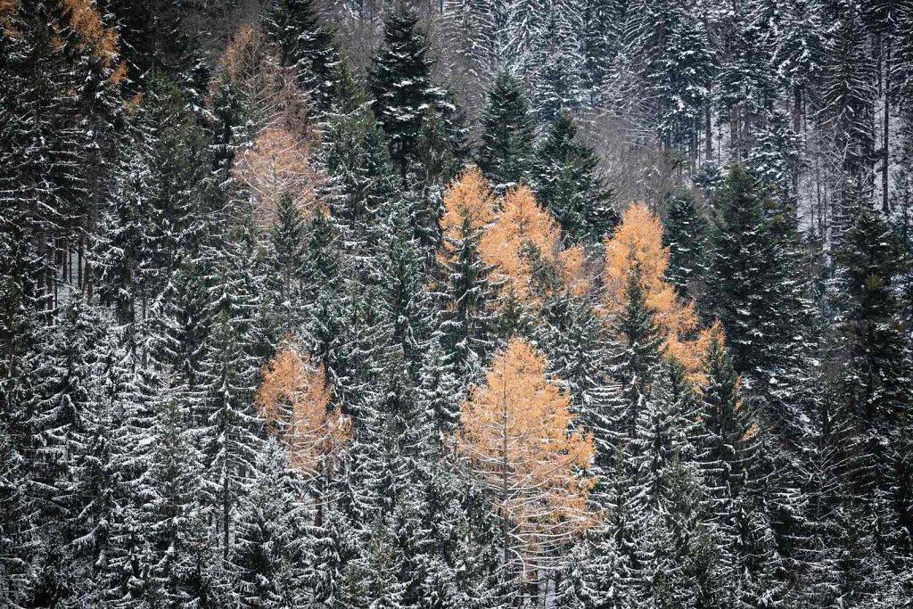 Schwarzwald XXXIV