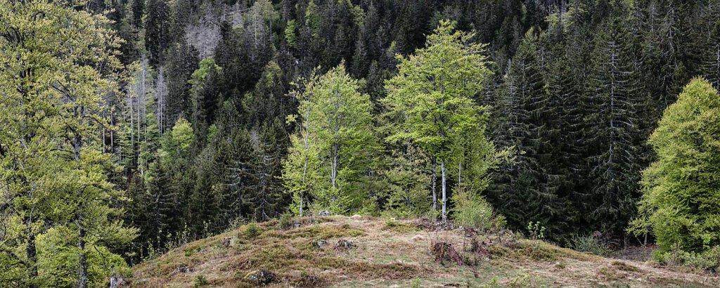 Schwarzwald XXXV