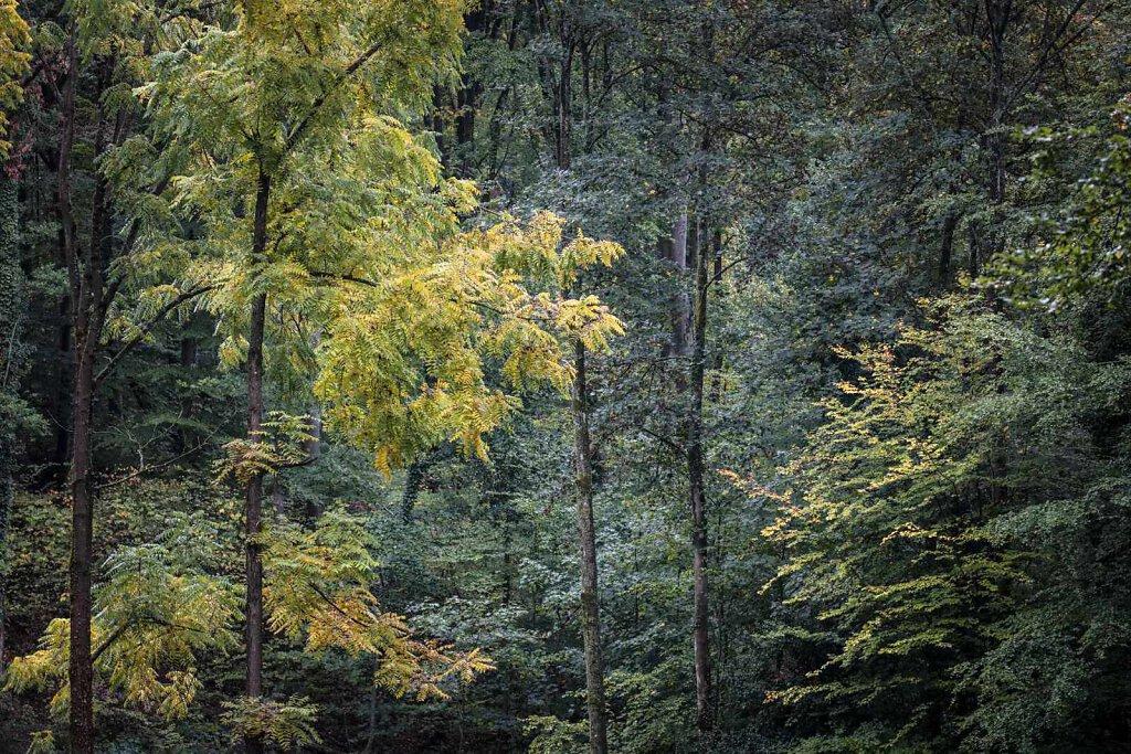 Rheinwald 10